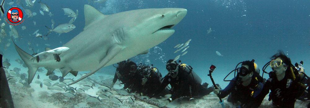 Phantom Divers : Global Shark Diving